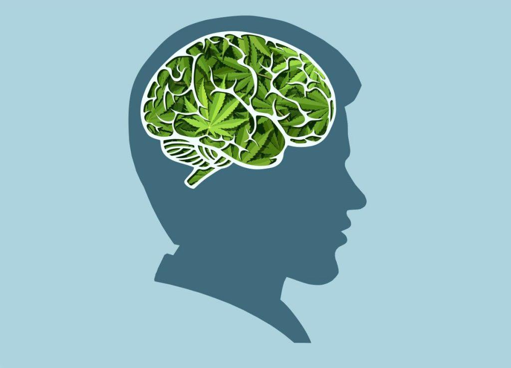 cbd mémoire cerveau