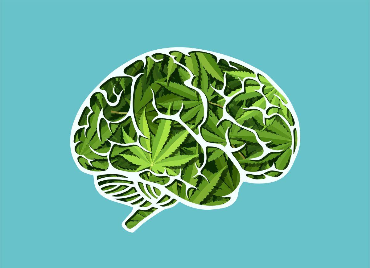 cbd memoria cerebro