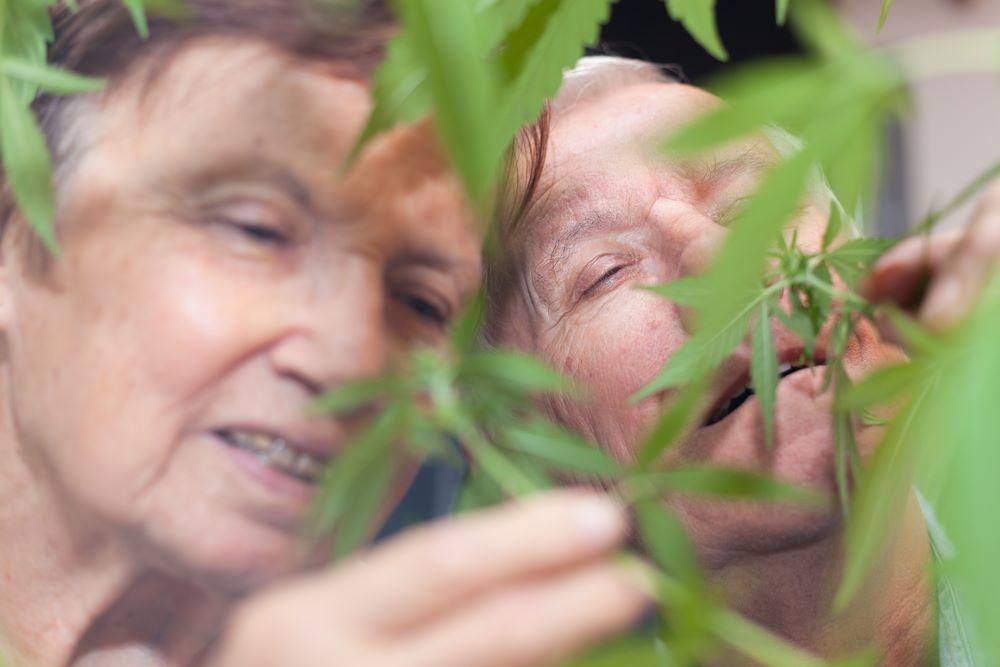 seniors cannabis médical