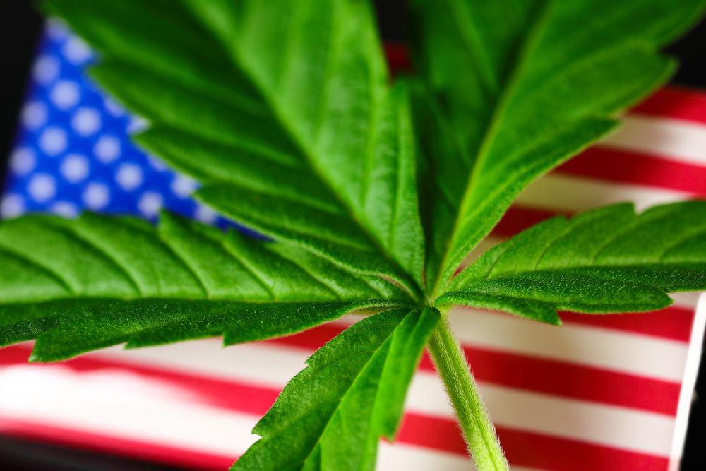 américains cannabis